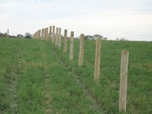 Final posts for pasture