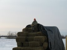 Tracy waits for our hay customers